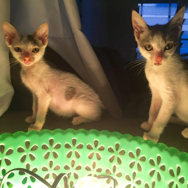 Lupelele and Masina were found abandoned under a dumpster in a grocery store parking lot