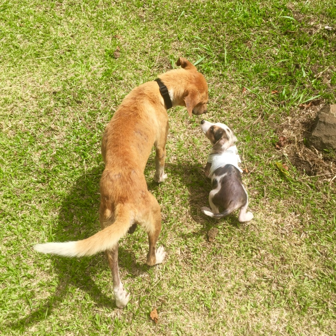 He made quick friends with his foster brother, Tupu