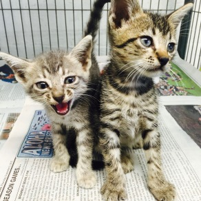 Two small patients await care and adoption in one of the rooms