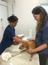 Vet Tech Shawnti cleans a new patient