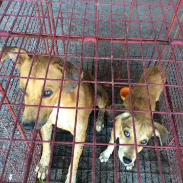 Strays Julep and Sausage awaiting care at the veterinary clinic