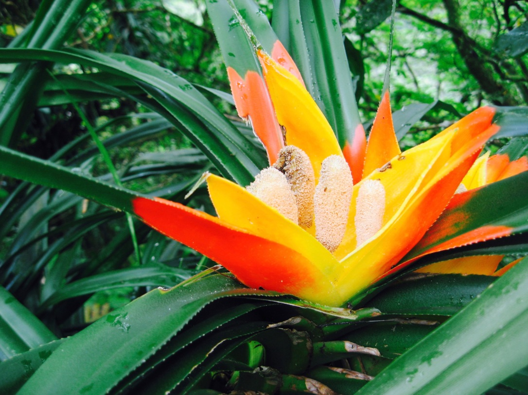 Visit the island of American Samoa in the South Pacific for a tropical getaway with exotic flowers and rainforest wildlife.jpg